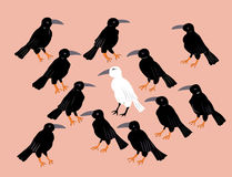 Corvo branco desgrenhado entre corvos pretos Fotografia de Stock