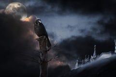 Corvo de Halloween Foto de Stock