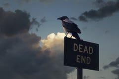 Corvo di tramonto Fotografie Stock