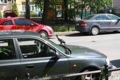 Corvo e carros na rua em Petersburgo foto de stock royalty free