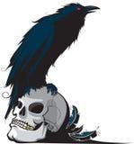 Corvo e crânio Imagens de Stock Royalty Free