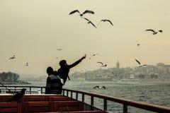 Corvo e gabbiano di Costantinopoli Fotografie Stock Libere da Diritti