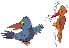 Corvo e woodpecker Imagens de Stock Royalty Free