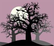 Corvo em uma floresta da noite Imagens de Stock