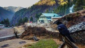 Corvo in Himalaya Fotografia Stock Libera da Diritti