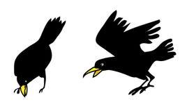 Corvo, ilustração do pássaro dos corvos Fotografia de Stock Royalty Free