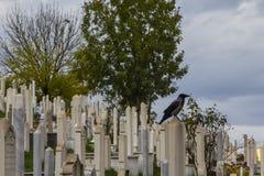 Corvo nel cimitero musulmano Sarajevo Bosnia-Erzegovina immagine stock