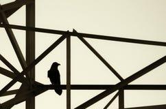 Corvo nero che si siede sull'albero Immagine Stock