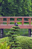 Corvo no jardim japonês Fotos de Stock Royalty Free