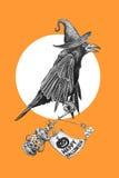 Corvo preto em um chapéu das bruxas Fotografia de Stock