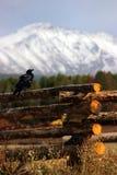 Corvo sulla rete fissa con le montagne nella priorità bassa Fotografia Stock Libera da Diritti