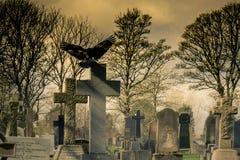 Corvo in un cimitero Fotografia Stock