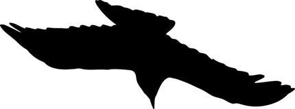 Corvo in volo Fotografie Stock Libere da Diritti
