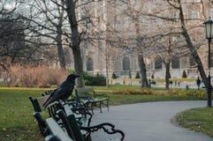 Corvos do jardim de Wien Hofburg imagem de stock