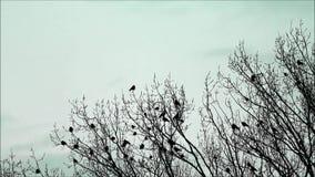 corvos na árvore, natureza, equipe, fundo colorido filme