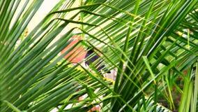 Corvos que sentam-se na folha da árvore de coco vídeos de arquivo