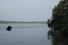 Corvos que voam sobre o rio Ganga na Índia fotografia de stock royalty free