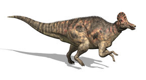 Corythosaurus Dinosaur Stock Photos