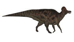 Corythosaurus dinosaur - 3D render. Corythosaurus dinosaur walking isolated in white background - 3D render stock illustration
