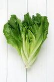 cos изолировал салат стоковые фотографии rf