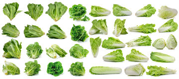 Cos fresh chinese cabbage and lettuce on white background Stock Image