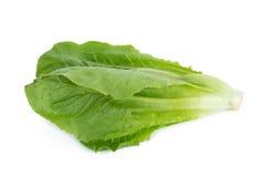 Cos Lettuce aisló en el fondo blanco Imagenes de archivo