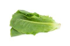 Cos Lettuce aisló en el fondo blanco Imagen de archivo