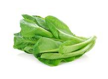 Cos Lettuce frais Photos stock