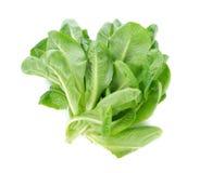 Cos Lettuce frais Photo stock