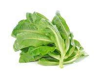 Cos Lettuce frais Images libres de droits