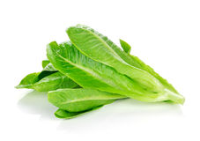 Cos Lettuce fresco Fotografie Stock Libere da Diritti