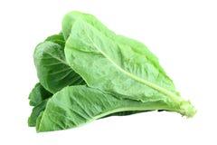 Cos Lettuce. Stock Photos