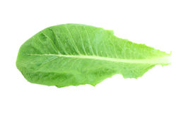 Cos Lettuce. Royalty Free Stock Image