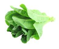 Cos Lettuce. Royalty Free Stock Photos