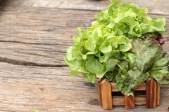Cos Lettuce, green on wood background Stock Photo