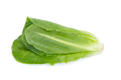 Cos Lettuce ha isolato su fondo bianco Fotografia Stock