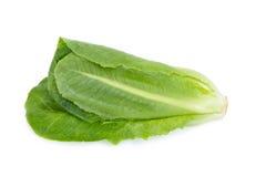 Cos Lettuce op Witte Achtergrond wordt geïsoleerd die Stock Foto