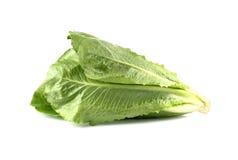 Cos Lettuce, Romaine Lettuce su fondo bianco Fotografie Stock