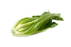 Cos Lettuce vert frais sur le blanc Photographie stock libre de droits