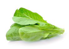 Cos Lettuce on White Background Stock Photography