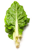 Cos lettuce Stock Photography
