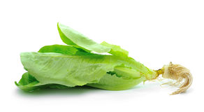 Cos Lettuce   on White Background Royalty Free Stock Photography