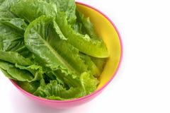 Cos verde, verdura di coltura idroponica immagini stock