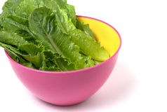 Cos verde, verdura di coltura idroponica fotografia stock libera da diritti