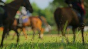 Cosacos rusos en los caballos que ensayan la formación ecuestre metrajes
