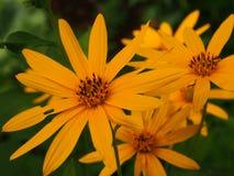 Cosas amarillas Foto de archivo libre de regalías