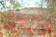Cosas asombrosas alrededor de nosotros en la naturaleza - cadera color de rosa Imagen de archivo libre de regalías