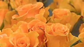 Cose-up arancio di giorno del ` s del biglietto di S. Valentino degli ambiti di provenienza del fiore di Rosa stock footage