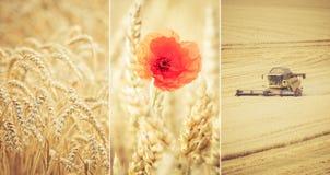 cosecha Imagen de archivo libre de regalías