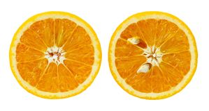 Cosecha anaranjada aislada Imagenes de archivo